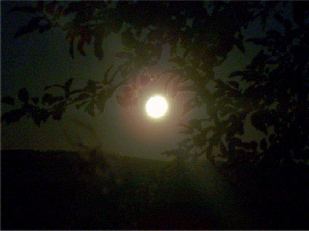 Mond20-6-05_1.jpg